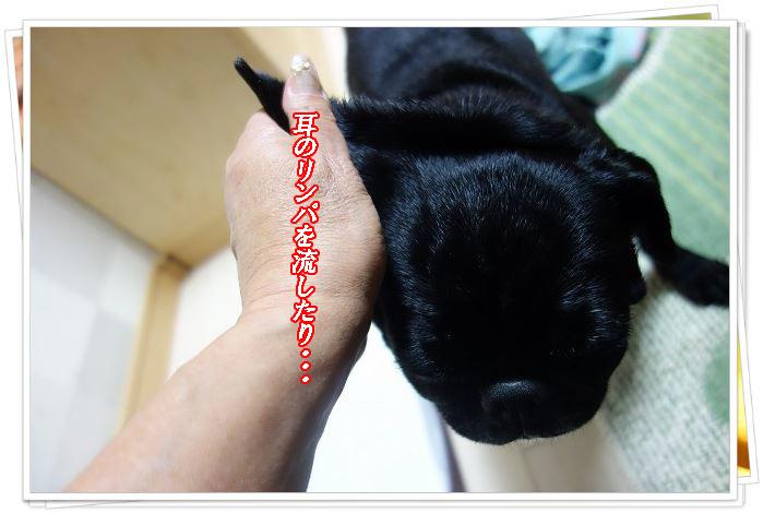 耳のリンパ