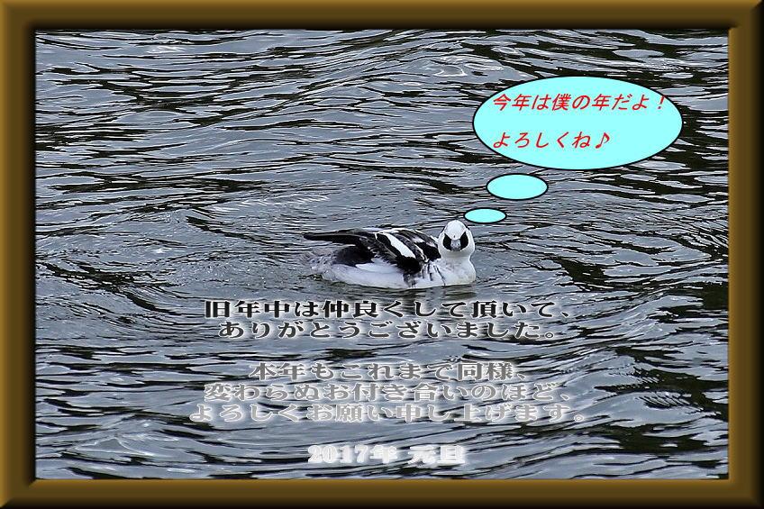 image_201701020531596ca.jpg