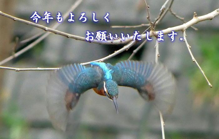 20170101 HD-kawasemi-20160305-4k-P1010382