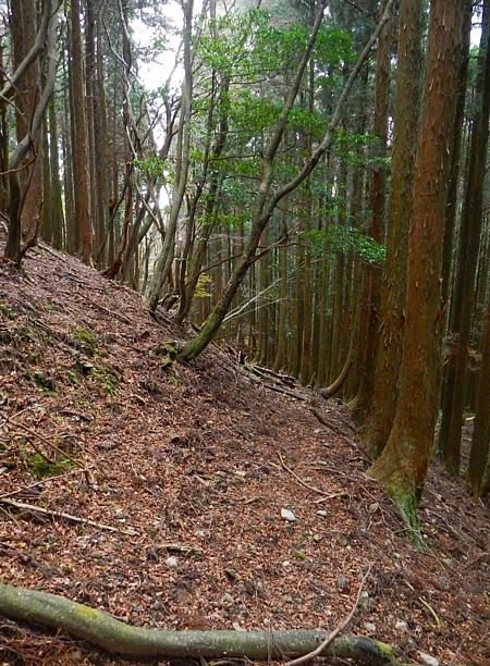 201612_Saruyama_37.jpg