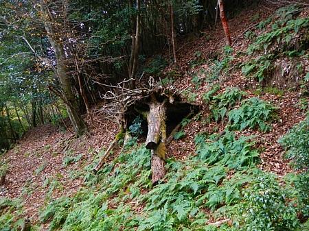 201612_Saruyama_41.jpg