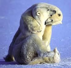 星野道夫 熊の親子