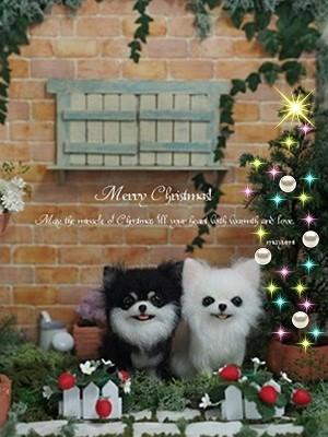 クリスマスツリーとチワワ (2)