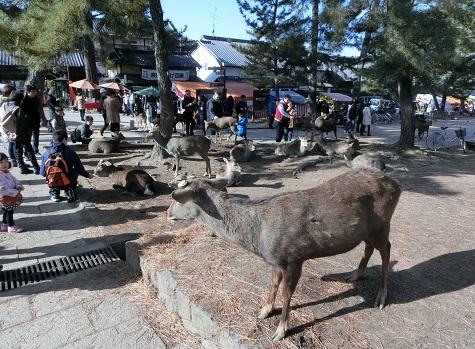 1 奈良公園・参道入口
