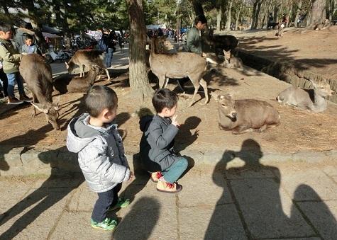 2 奈良公園・参道入口