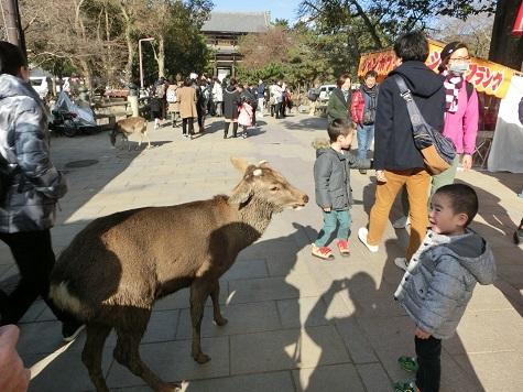 3 奈良公園・参道