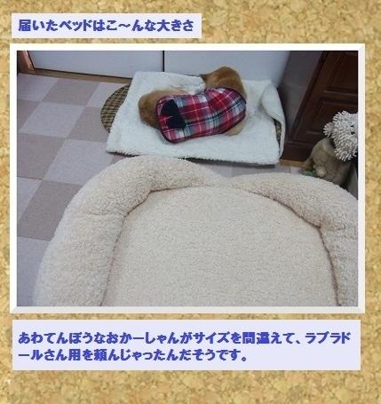コルクボード・新しいベッド2
