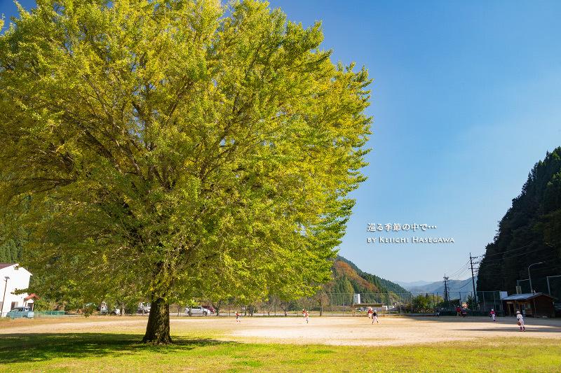 〜銀杏〜旧日野小学校