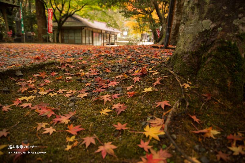 島根県安来市 清水寺の紅葉