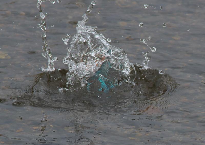 魚付 (1)