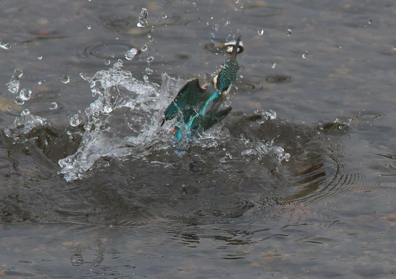 魚付 (2)
