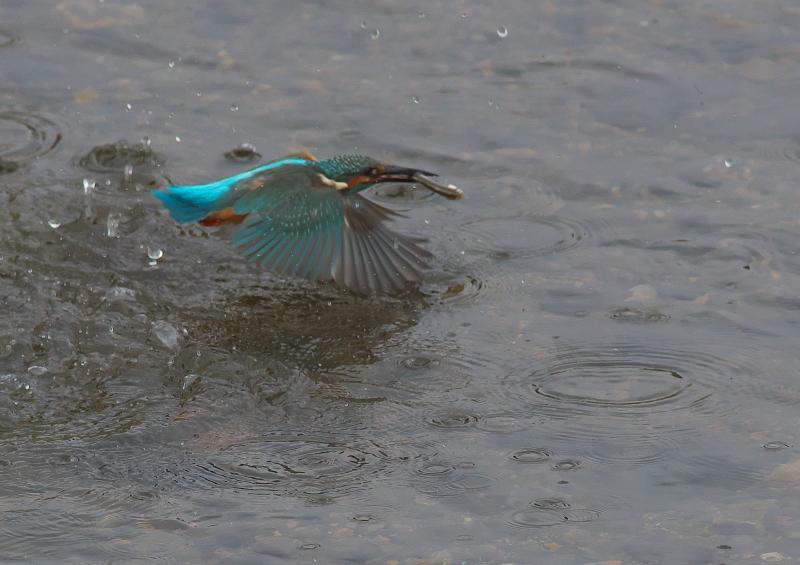 魚付 (4)