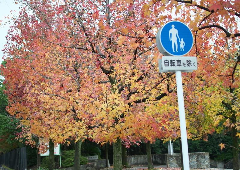 中央公園 (1)