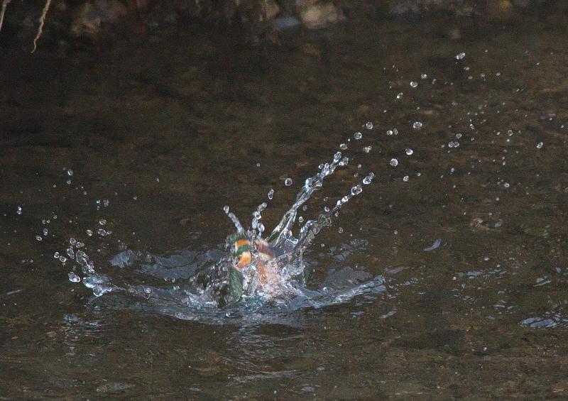水浴び (2)