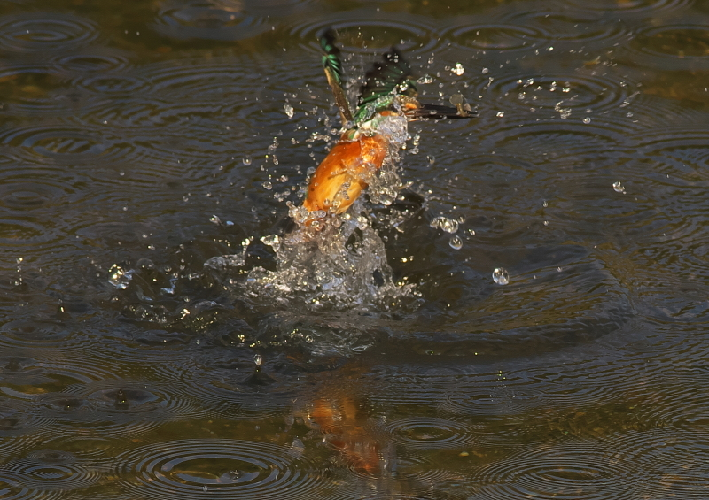 小さな魚 (3)