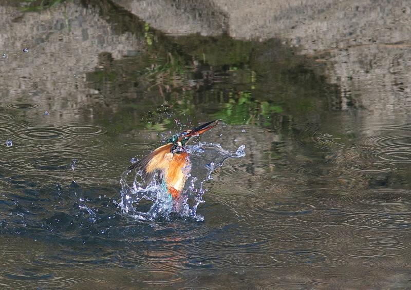魚付 (3)