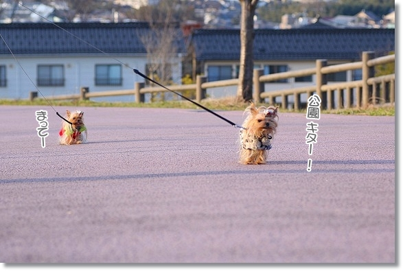 IMG_4144a (3)