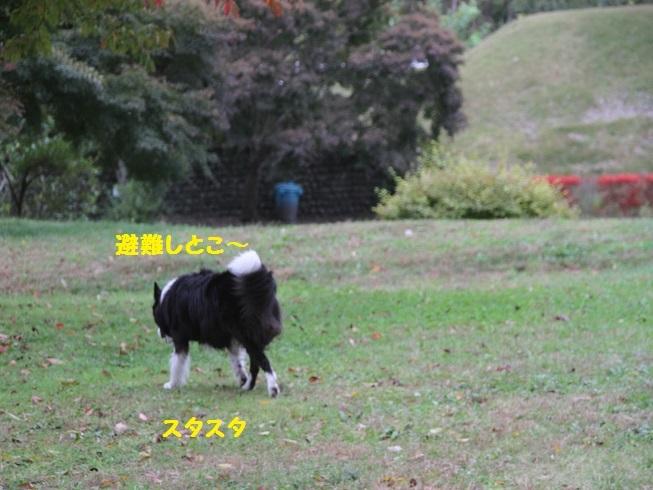 IMG_0040_201611072051007d9.jpg