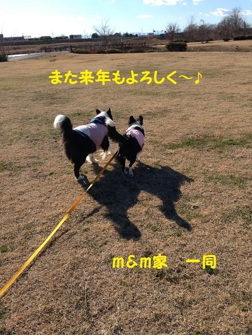 IMG_3528_20161230210630add.jpg