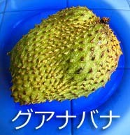 IMG_1702大 - コピーのコピー