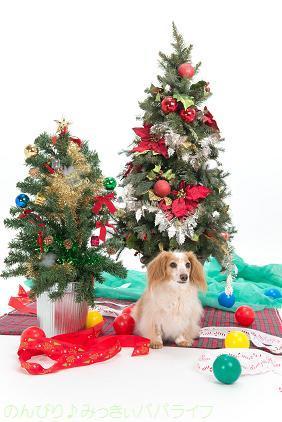 christmas201601.jpg