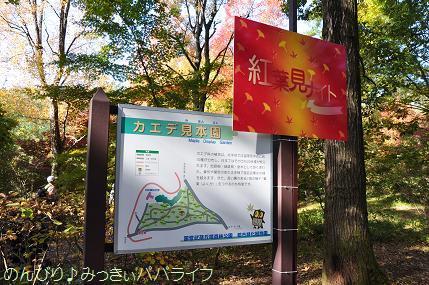 shinrinkoen20161114.jpg