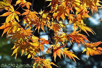 shinrinkoen20161119.jpg