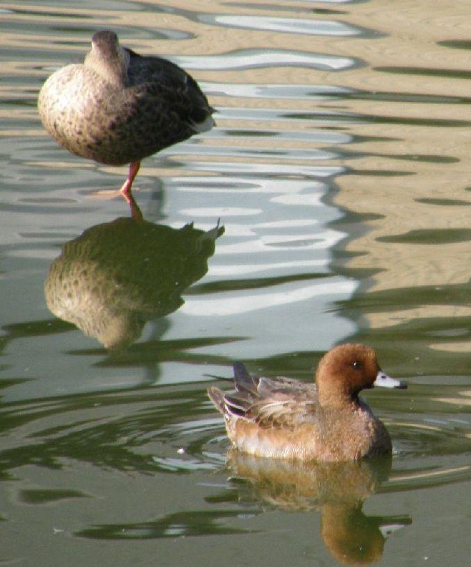700-888水と鳥2匹面白い いい