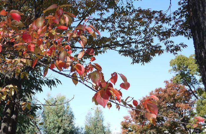 700-455公園の紅葉いい