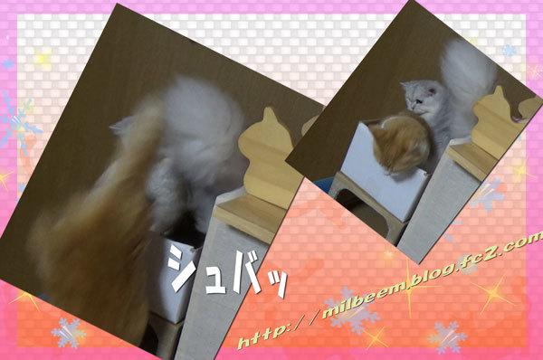 nakayosido003_2.jpg