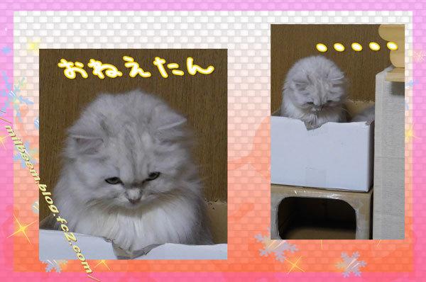 nakayosido004.jpg