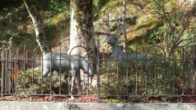 丹波篠山・春日神社06鹿