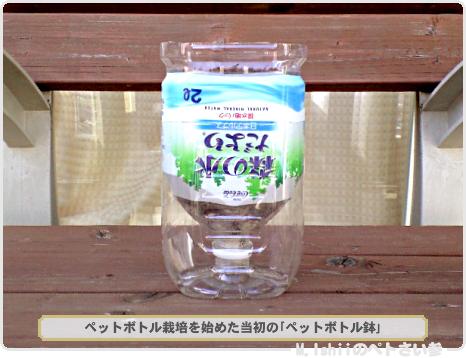 昔のペットボトル鉢