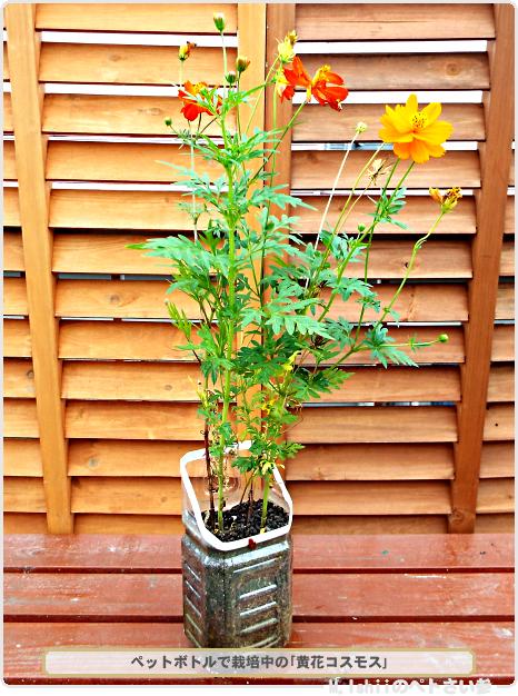 花栽培用ペットボトル鉢01