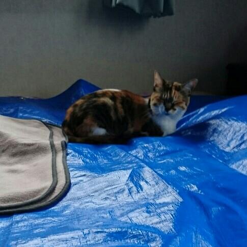 子 匂い 猫 布団 消し の 押し っ の