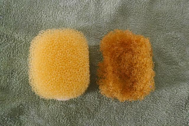 sponge01_170131.jpg