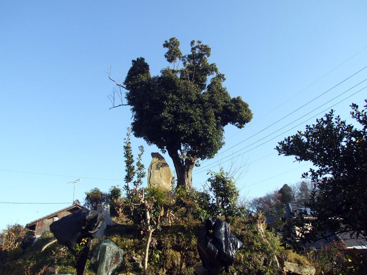沓掛古墳の全景
