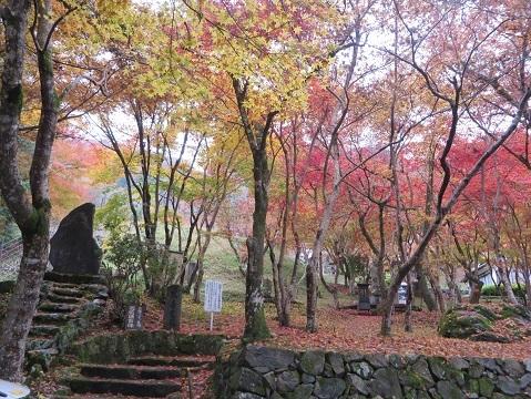 長安寺のモミジ 020-1v