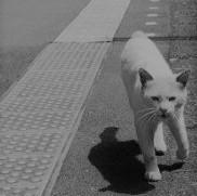 東京写真館2