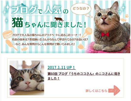 ブログで人気の猫ちゃんに聞きました!
