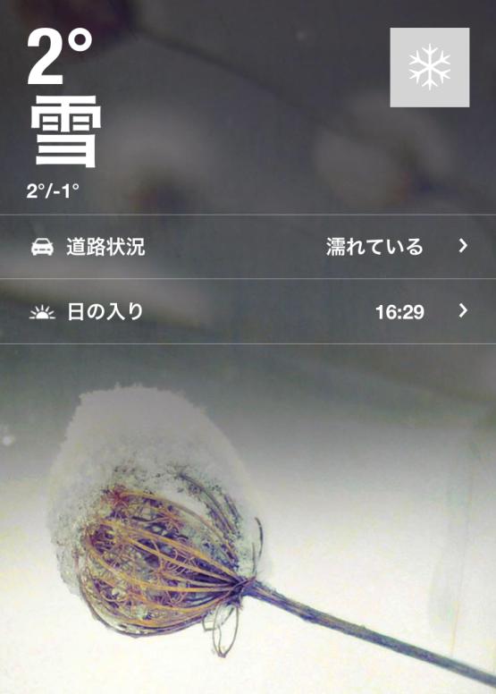 初雪20161124