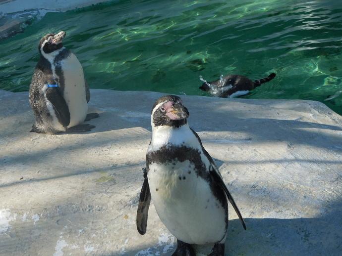 161202ペンギン