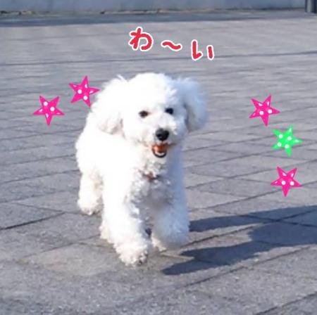 2017 ボール遊びみゆ