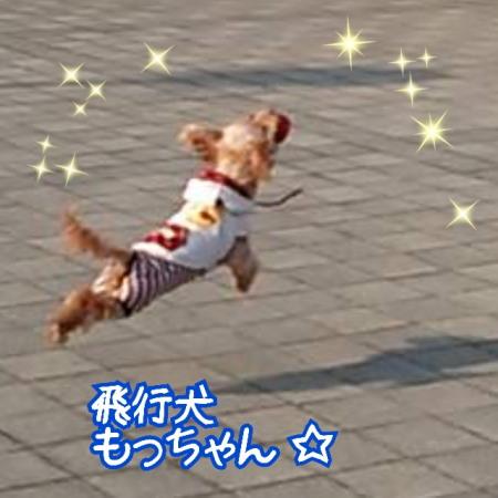 2017飛行犬モコ