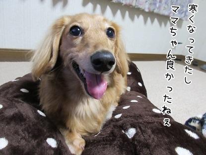 kinako6006.jpg
