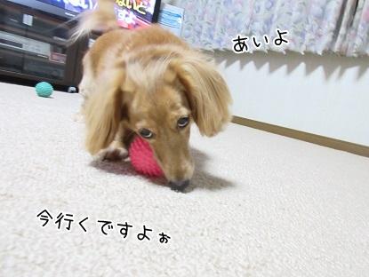 kinako6017.jpg