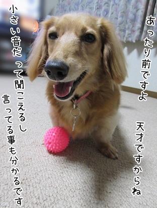 kinako6019.jpg
