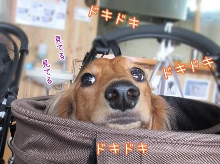kinako6037.jpg