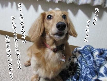 kinako6041.jpg