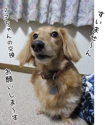 kinako6044.jpg